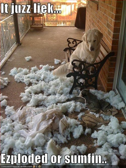 best of the week clean up on aisle 3 destruction exploded golden retriever mess oops wasnt me - 5047516672