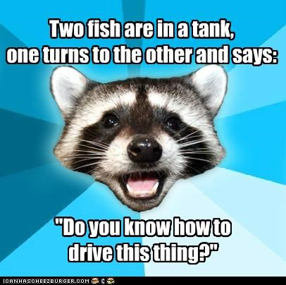 animemes,divers,drivers,fish,Lame Pun Coon,swimming,tank