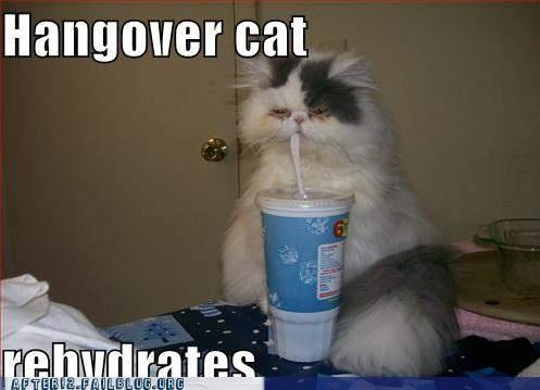 dehydrated hangover lolcat - 5047807744