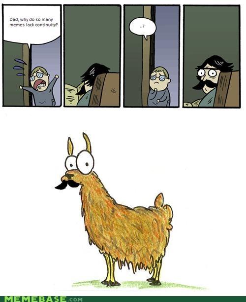 continuity,huh,llama,random,stare dad