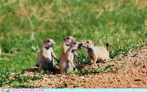 Babies baby bang doing it wrong end FAIL famous finale line loud poem prairie dog Prairie Dogs quote t-s-eliot the hollow men whimper whisper whispering - 5047999744