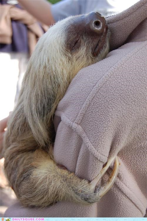 adorable asleep daww Hall of Fame holding hugging sleeping sloth - 5048048384