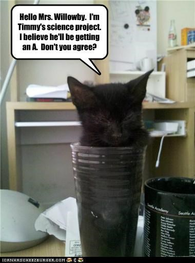 ä agreement belief caption captioned cat getting hello kitten mug persuading persuasion project science subtle - 5048235264