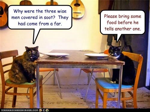 bad begging caption captioned cat Cats do not want food horrible joke non sequitur punchline request - 5048294656