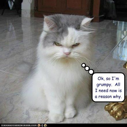 best of the week caption captioned cat grumpy Hall of Fame need now ok reason so why - 5048302848