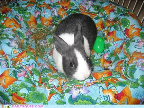 bed bunny cat rabbit reader squees - 5048329984