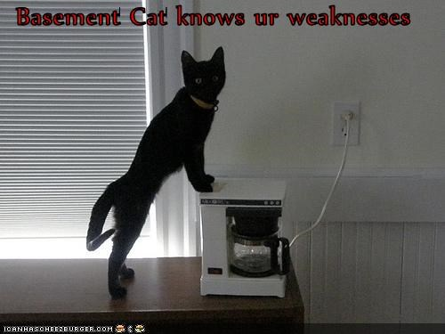 basement cat,caption,captioned,cat,coffee,coffee maker,know,knowing,knowledge,machine,weakness,weaknesses