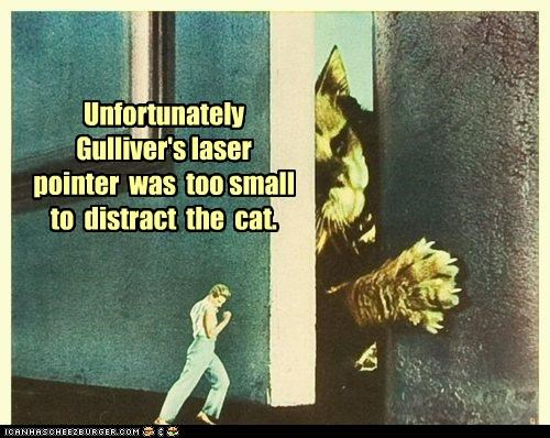 animal cat color funny Photo - 5048976384