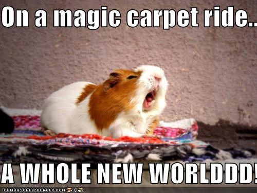 a whole new world,aladdin,caption,captioned,carpet,guinea pig,lyrics,magic,new,ride,singing,song,whole,world
