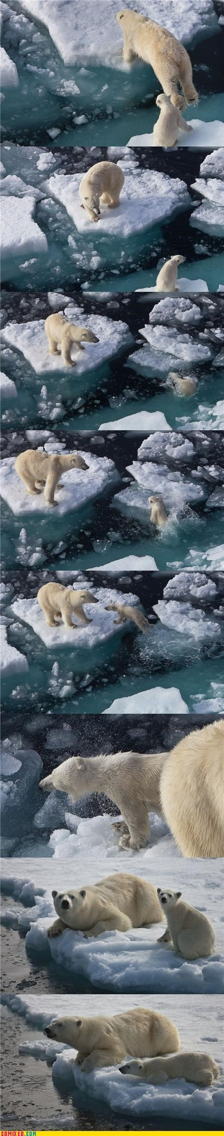 animals,global warming,polar bear,social good saturday,swim
