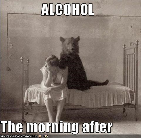 alcohol,animals,bears,hangover,historic lols,morning,sex,the morning after