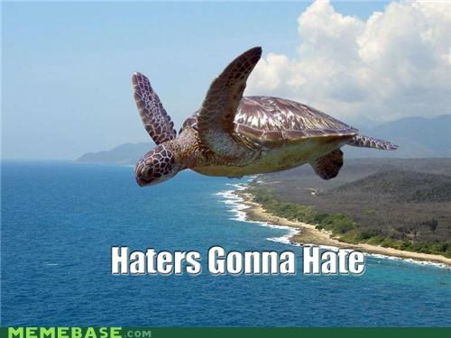 end of the day flying gonna hate haters Memes turtle
