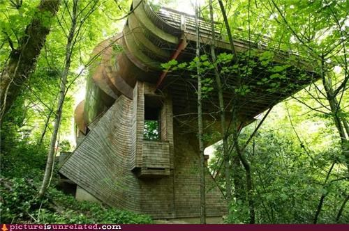 tree fort,woods,wtf