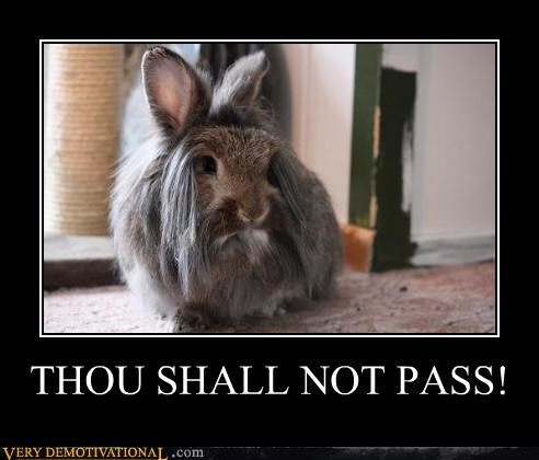 bunny gandalf hilarious shall not pass