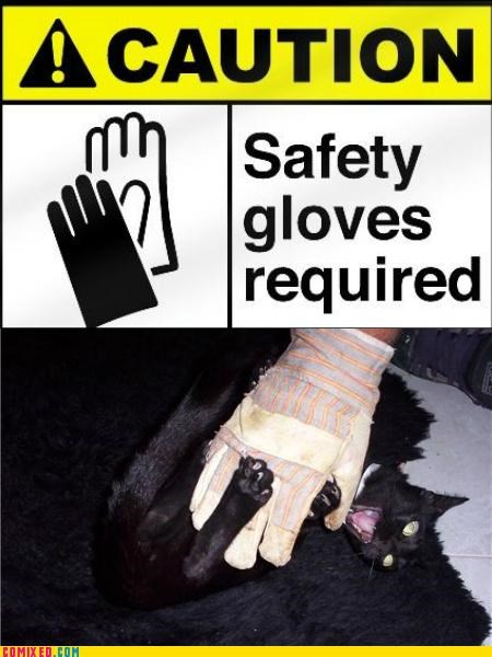animals attack cat demon glove