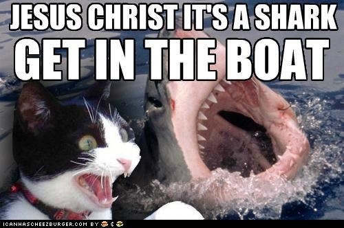 animals Cats I Can Has Cheezburger its-a-lion jesus christ Memes shark week sharks - 5050668544