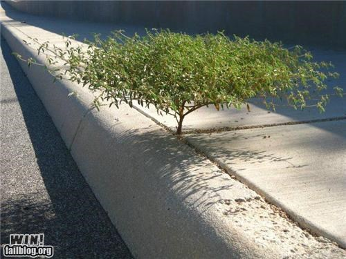 curb photography sidewalk tree - 5050753280