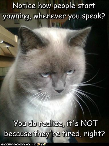 caption captioned cat explanation insult insulting mean sarcasm siamese speaking upset yawning - 5050898176