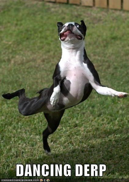 boston terrier critters dance fly jump - 5051107328