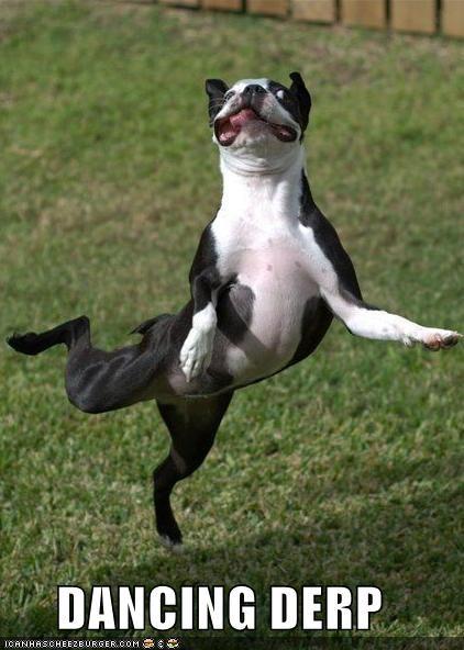 boston terrier critters dance fly jump - 5051107328