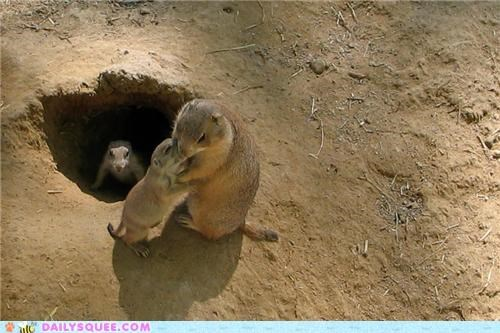 Babies,baby,end,goodbye,kisses,mother,prairie dog,Prairie Dogs,squee spree,work