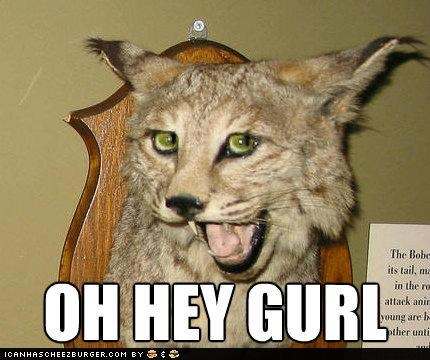 animals,hey girl,lynx,mouth open,sassy,stuffed