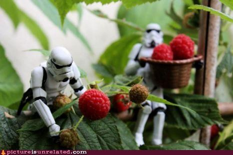 berry food stormtrooper wtf - 5051769088