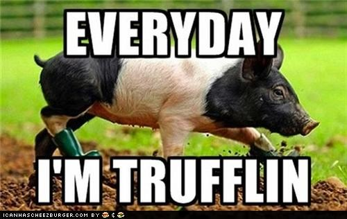 animals everyday-im-hustling I Can Has Cheezburger pig puns Songs Truffles - 5051872000