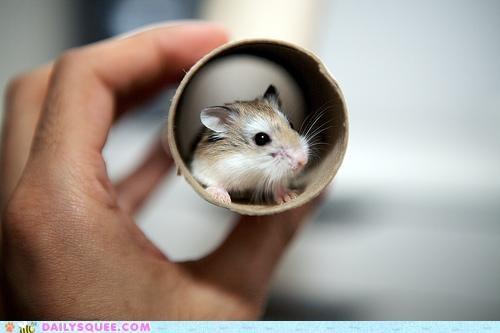 90s colloquialism dwarf hamster hamster justification slang tiny tube tubular vernacular - 5051878656