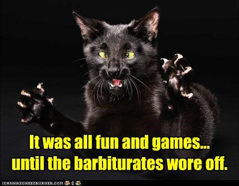 all,barbiturates,caption,captioned,cat,crazy,fun,games,off,sober,sobering up,until,wore
