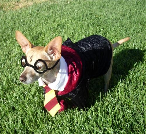 doggeh,Harry Potter,Sundog