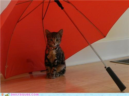 cat gallery museum playing reader squees umbrella