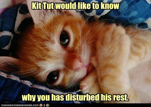 awake,best of the week,caption,captioned,cat,disturbed,king,kitten,mummy,Pharaoh,pun,rest,Staring,tabby,tut