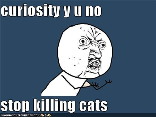 cat curiosity Death murder Y U No Guy