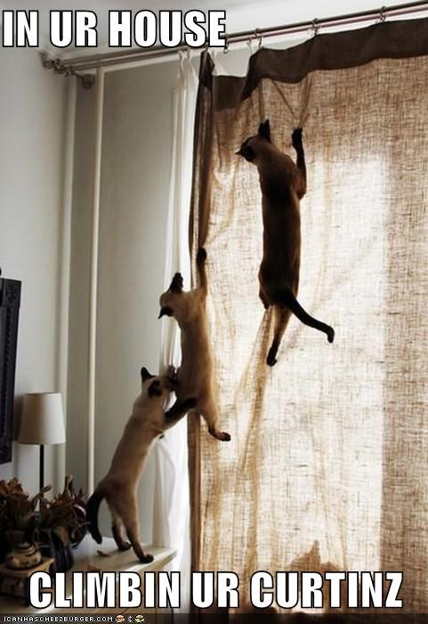 caption captioned cat Cats climbing curtain house in - 5054834432