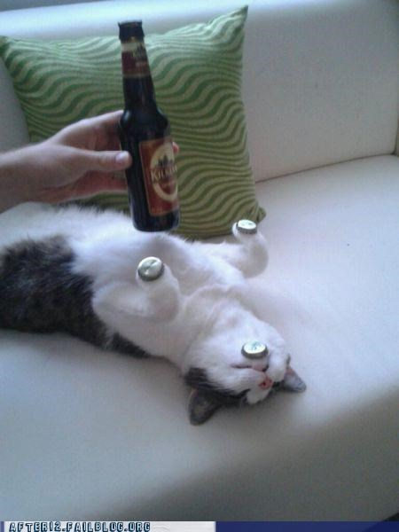 balancing act,beer,cap,cat,crunk critters,passed out