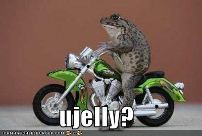 animals,frogs,I Can Has Cheezburger,jealous,motorcycles,tiny,toads,u jelly,wat