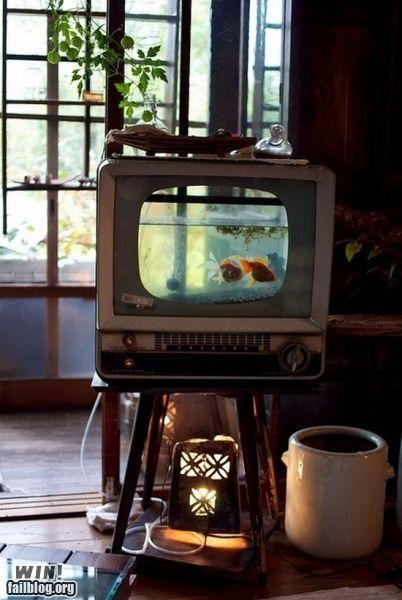 aquarium design fish home re-purpose - 5055100672
