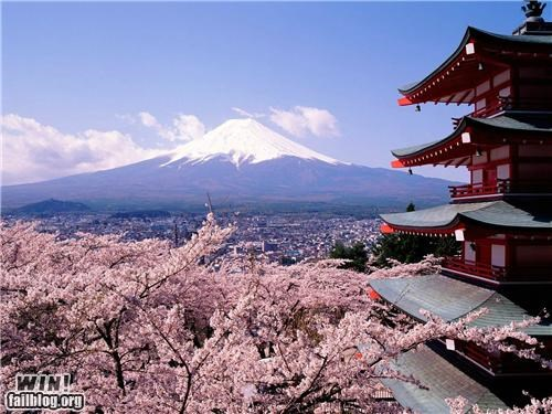 castle cherry blossom fuji Japan mt-fuji photography - 5055121664
