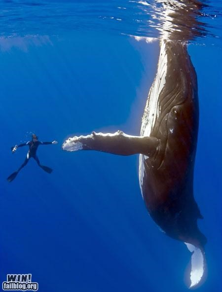 classic diving high five scuba underwater whale - 5055231488