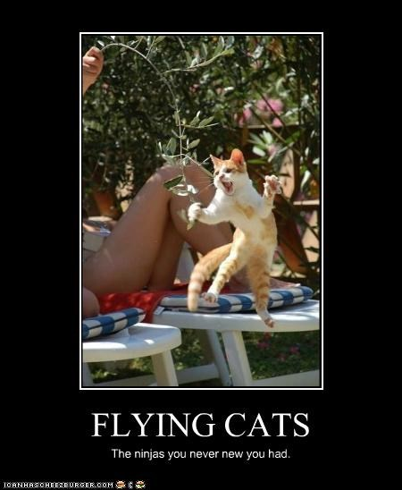 FLYING CATS The ninjas you never new you had.
