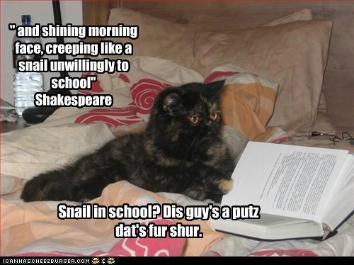 caption,captioned,cat,confused,lolwut,quote,reading,shakespeare