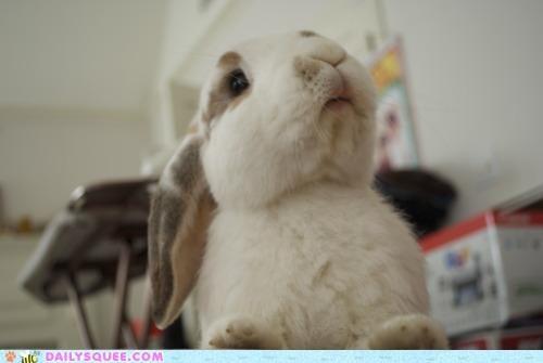 Bunday bunny happy happy bunday haughty snooty - 5055748096