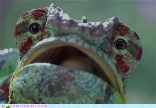 acting like animals blindspot cannot unsee do not want eyes free horrified lizard unsee - 5055865856