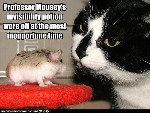 caption captioned cat danger faded hamster inopportune invisibility most mouse off oops potion professor time wore wore off
