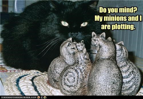 basement cat caption captioned cat do me mind minions plotting you - 5055882240