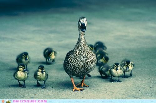 acting like animals,babysitting,bribery,collateral,duck,duckling,ducklings,ducks,herding,secret