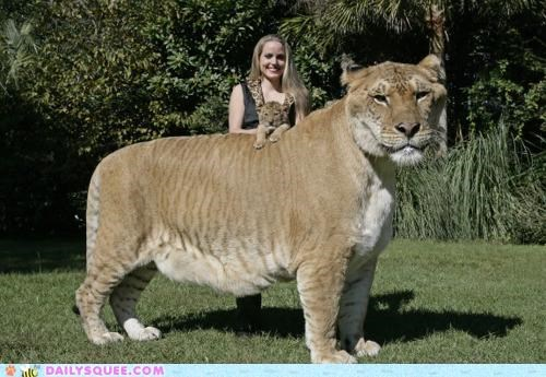 cub gigantic Hall of Fame holy cow liger omg size