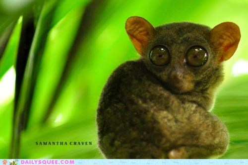 axiom eyes hypnotic hypnotized lolwut nonsense Staring tarsier - 5056208384