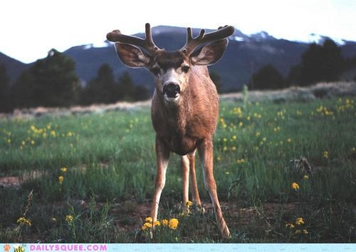 antlers,deer,deerthing,Growing,promise,young